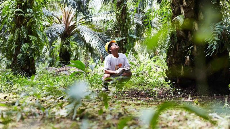 Feature image - Banning palm oil