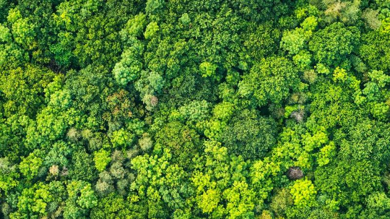 An aerial view of the rainforest featuring lush green trees