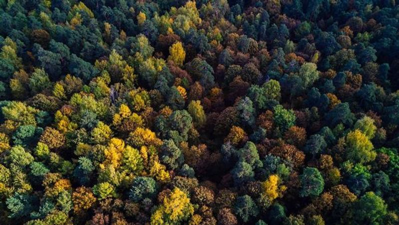 Overhead image of a forest