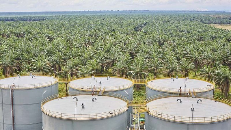 Feature image - palm oil factory