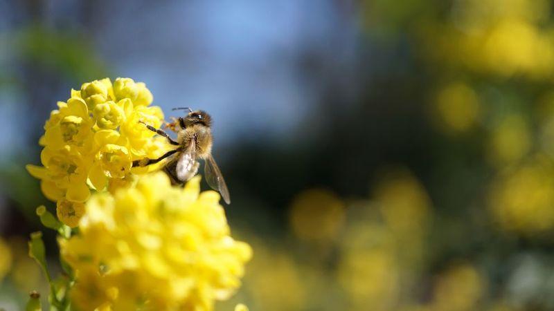 Bir arı, sarı renkli bir çiçeğin üzerinde