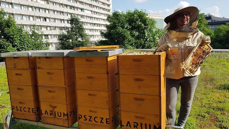 Poland Beekeeping