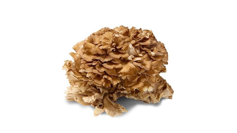 Image of a mushroom
