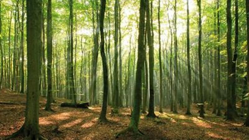 Sostenibilità clima unilever