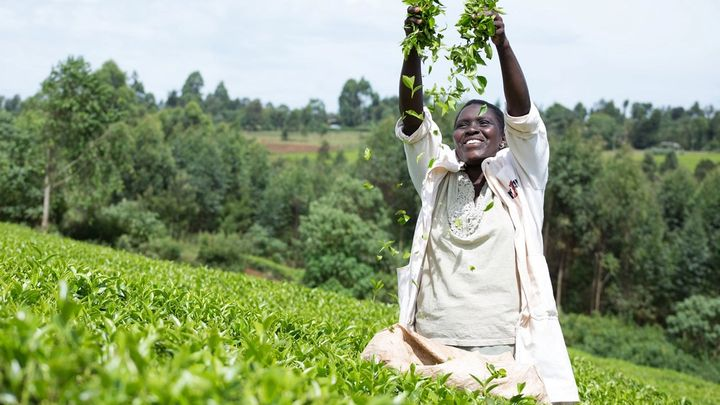 Woman standing in a tea plantation throwing freshly picked leaves in the air