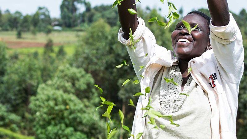 Tea worker throwing leaves