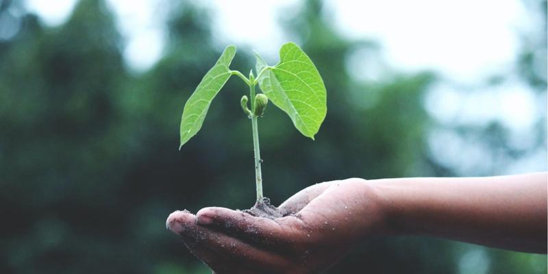 Egy kisgyerek egy növény palántát tart a kezében
