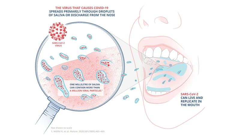 A diagram illustrating how the virus that causes Covid-19 is spread primarily through droplets of saliva.
