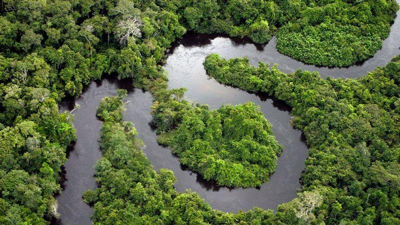 A river winding through the rainforest