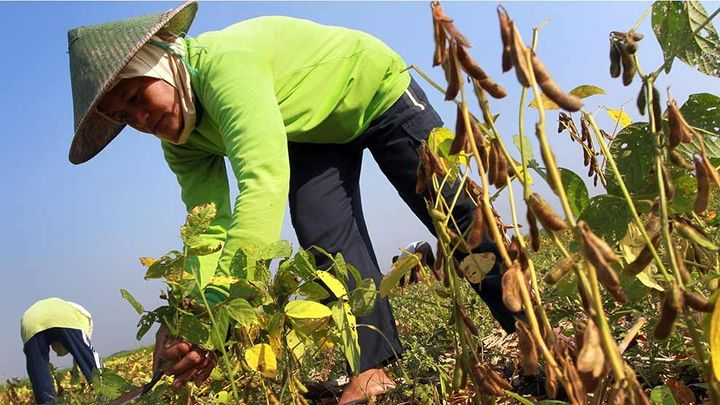 Fermier d'une petite exploitation de pousses de soja noir