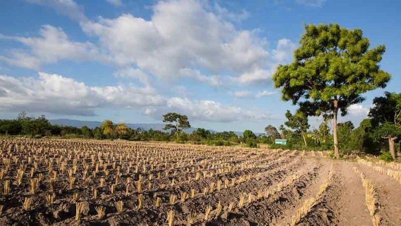 Fragrance farm in Haiti