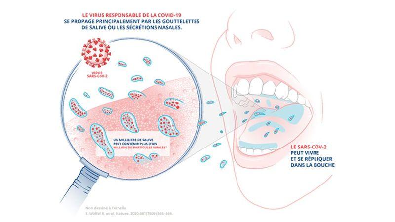 SARS-CoV-2 présent dans la bouche (Copyright Unilever)