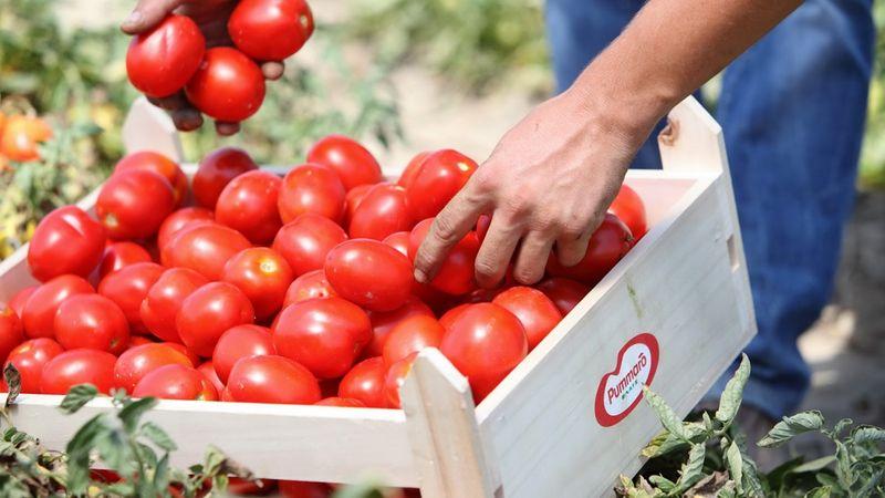 Ευρωπαϊκό βραβείο για το περιβάλλον, για  το πρόγραμμα Συμβολαιακής & Αειφόρου Καλλιέργειας Τομάτας