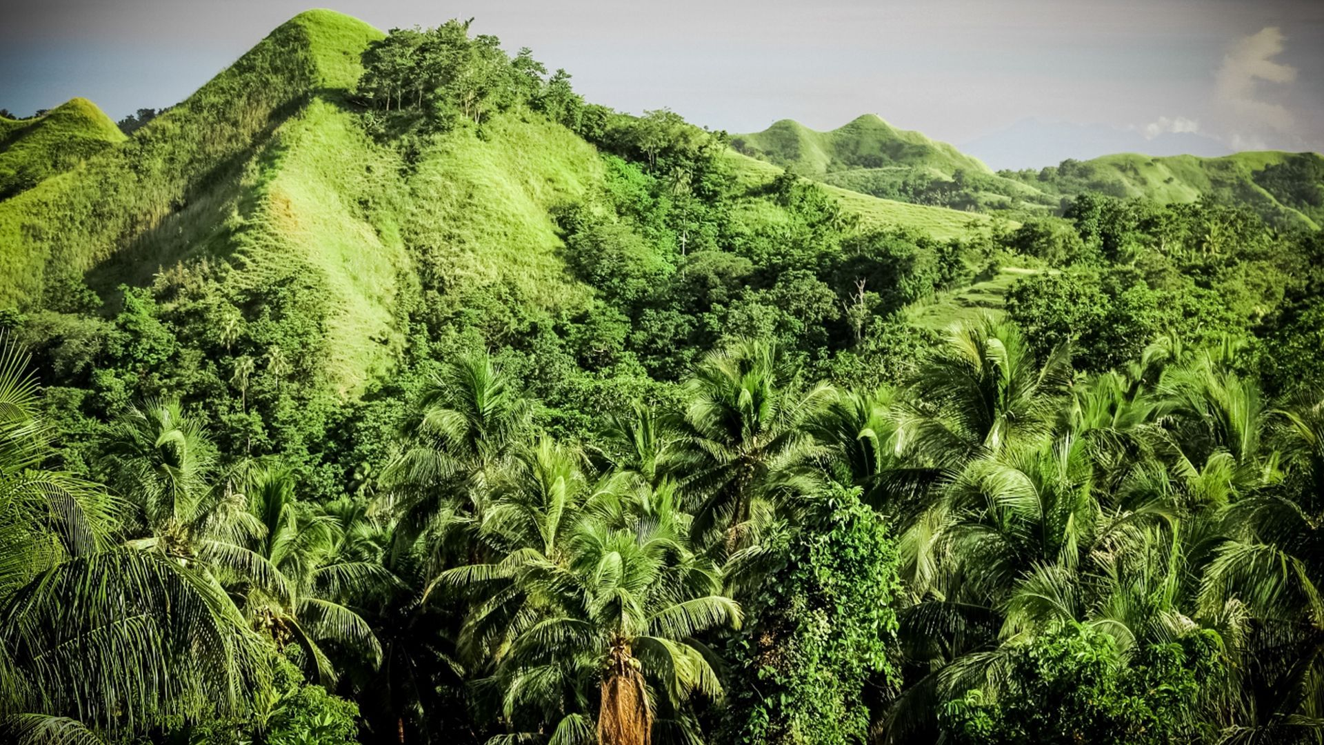 A landscape photograph of a lush, green forest