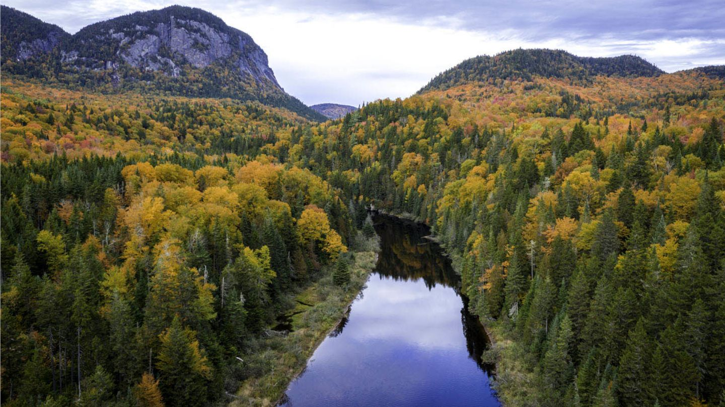 Aerial view of a river snaking through a dense forest on both banks with mountains in the distance