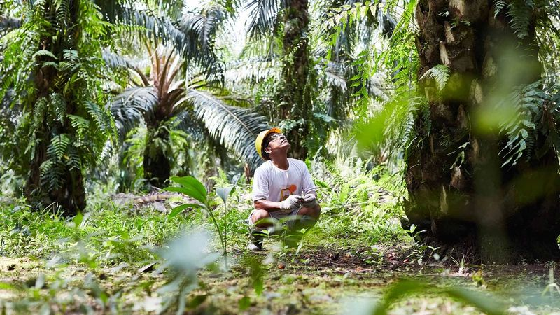 Man sitting in a field of palm