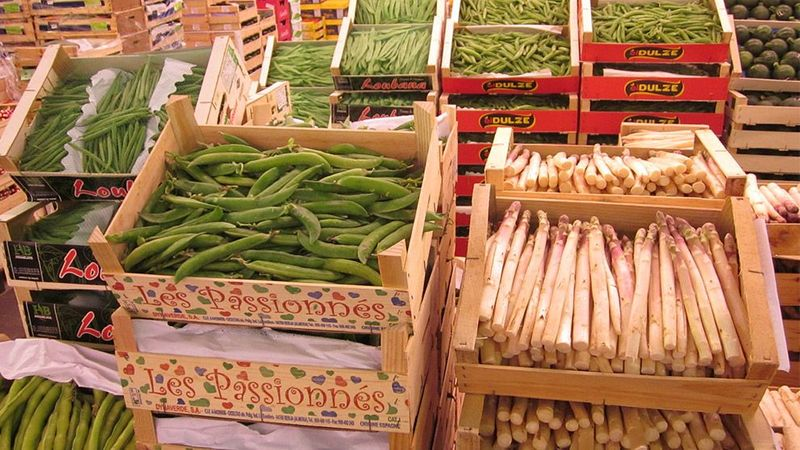 An array of fresh vegetables ready for cooking