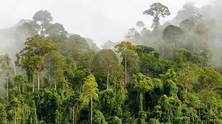 Mist through a tropical forest