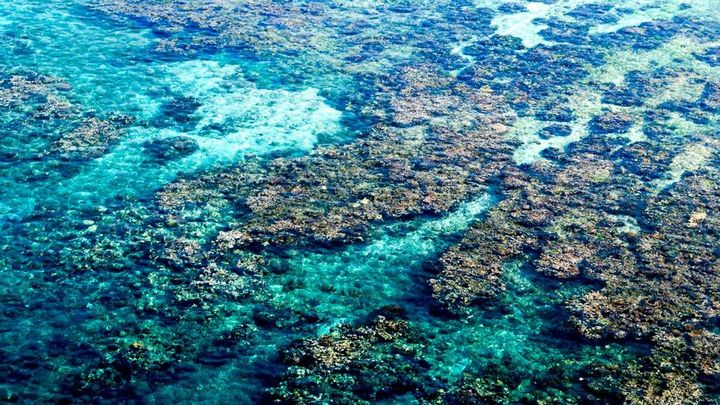 Aerial photograph of a coral reef, visible through clear, blue water.