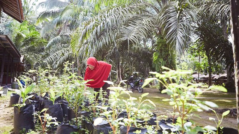 A woman checks out young plants in pots on a palm oil plantation in Indonesia