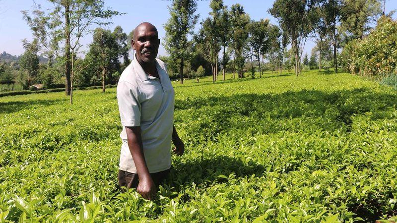 Wesley Korir: From Kenyan tea plucker to small business owner
