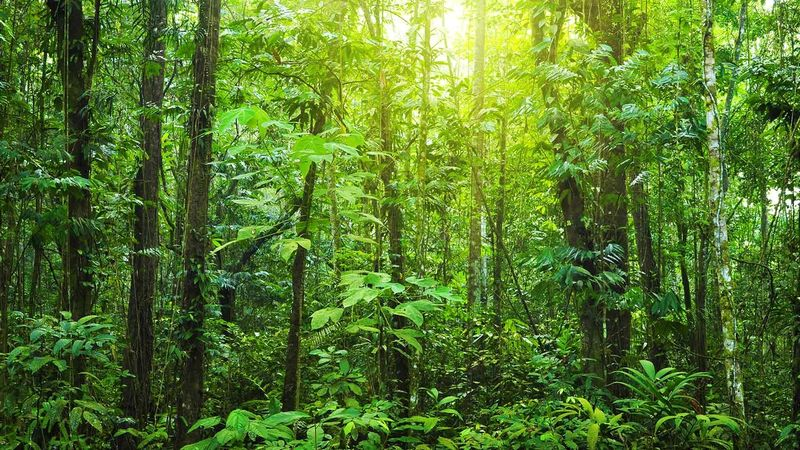Tropical dense forest with morning light