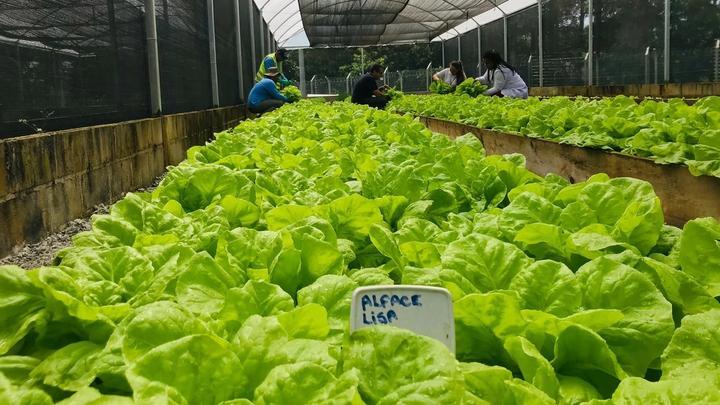 A team of Unilever employees harvesting vegetables.