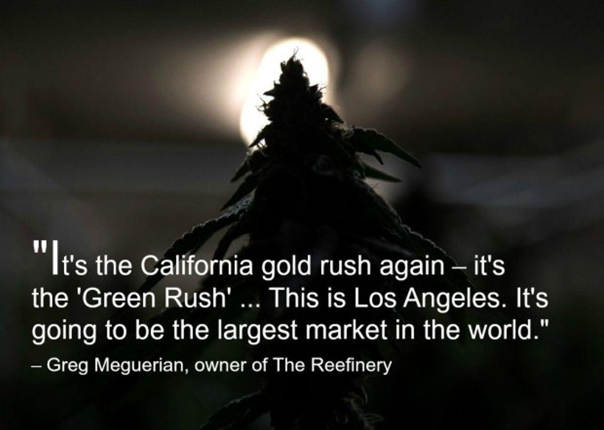 backlit cannabis plant