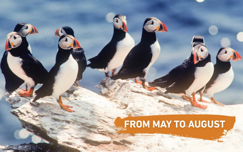 BEST PUFFIN TOUR IN ICELAND