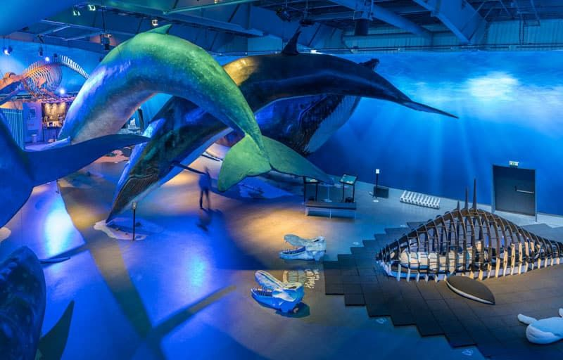 Whales of Iceland museum