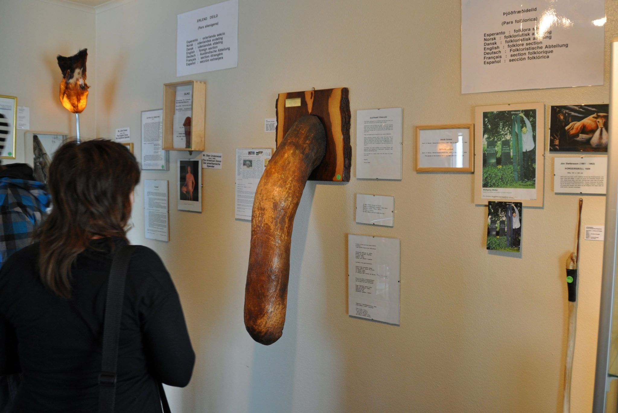 THE PENIS MUSEUM IN REYKJAVIK