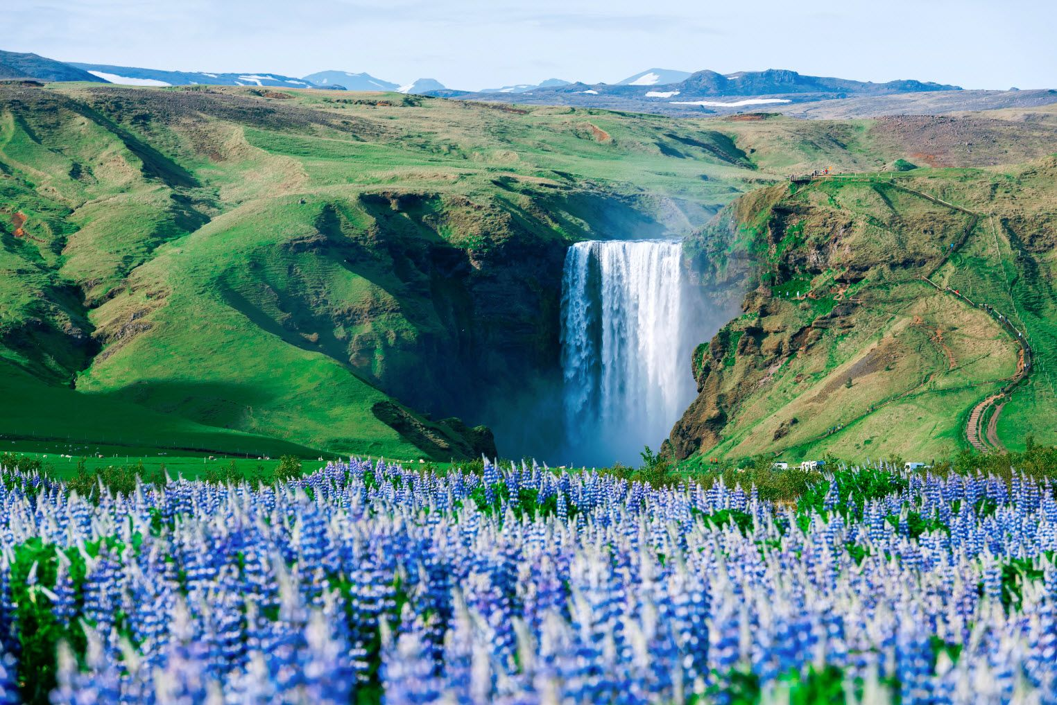 skogafoss during summer