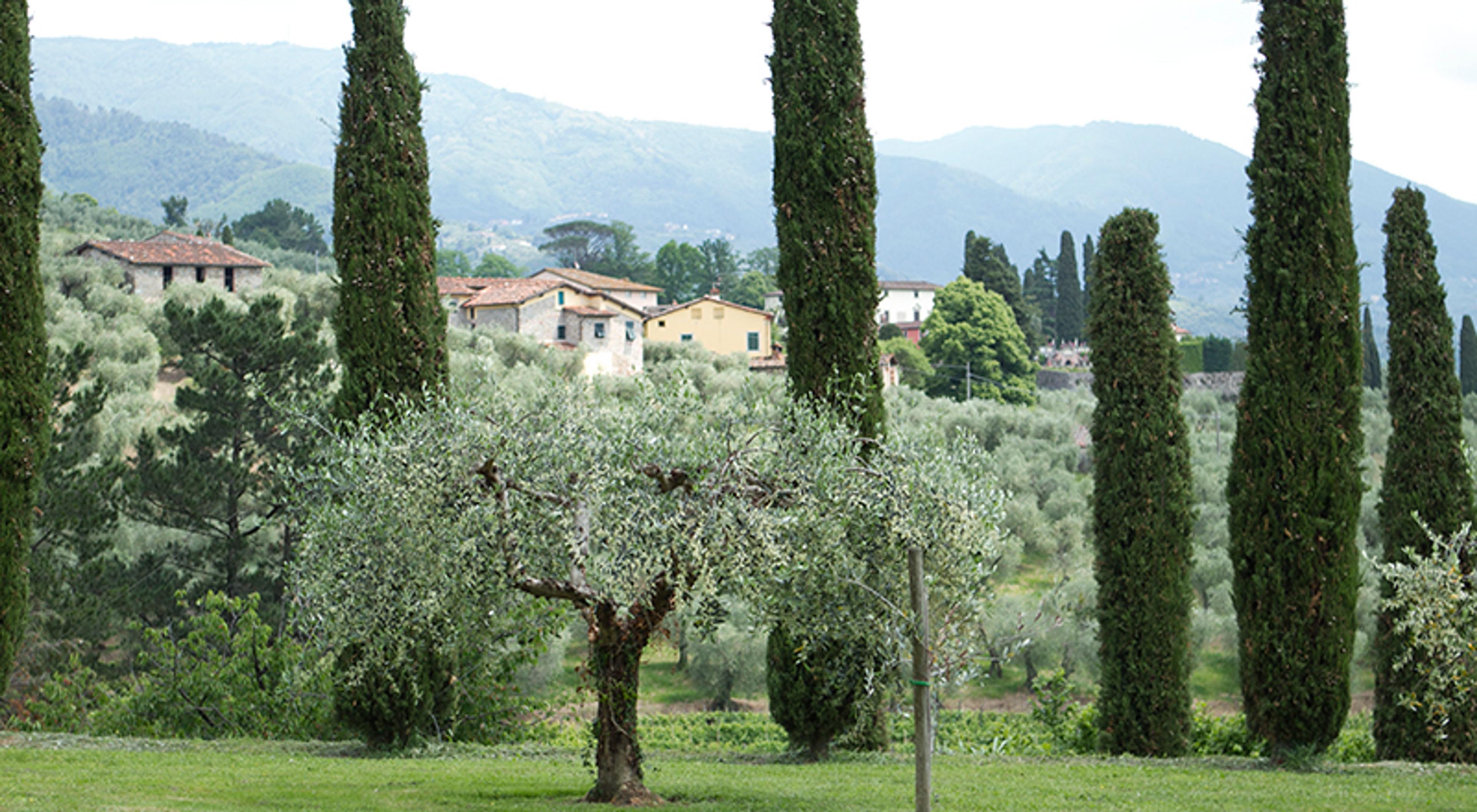 Slik bruker du olivenolje