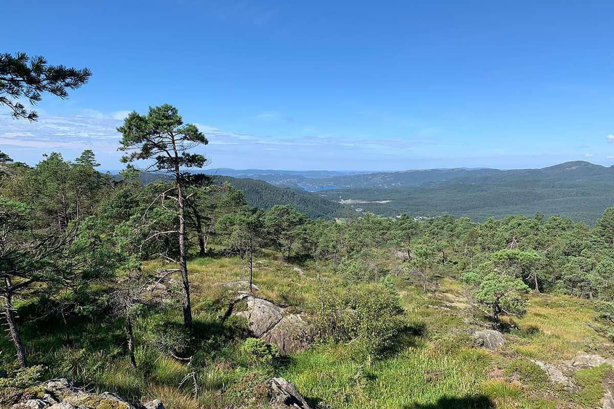 Framtidig utsikt frå dagstyrhytta på Borgafjellet, mot Endalausmarka og Lysefjorden. (Foto: Bjørnafjorden kommune)