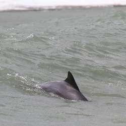 Delfinane er der kvar dag.  (Foto: KVB)