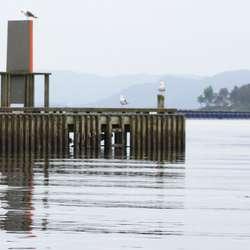 Det var tett mellom laksefinnene i hamna i helga. (Foto: Kjetil Vasby Bruarøy)