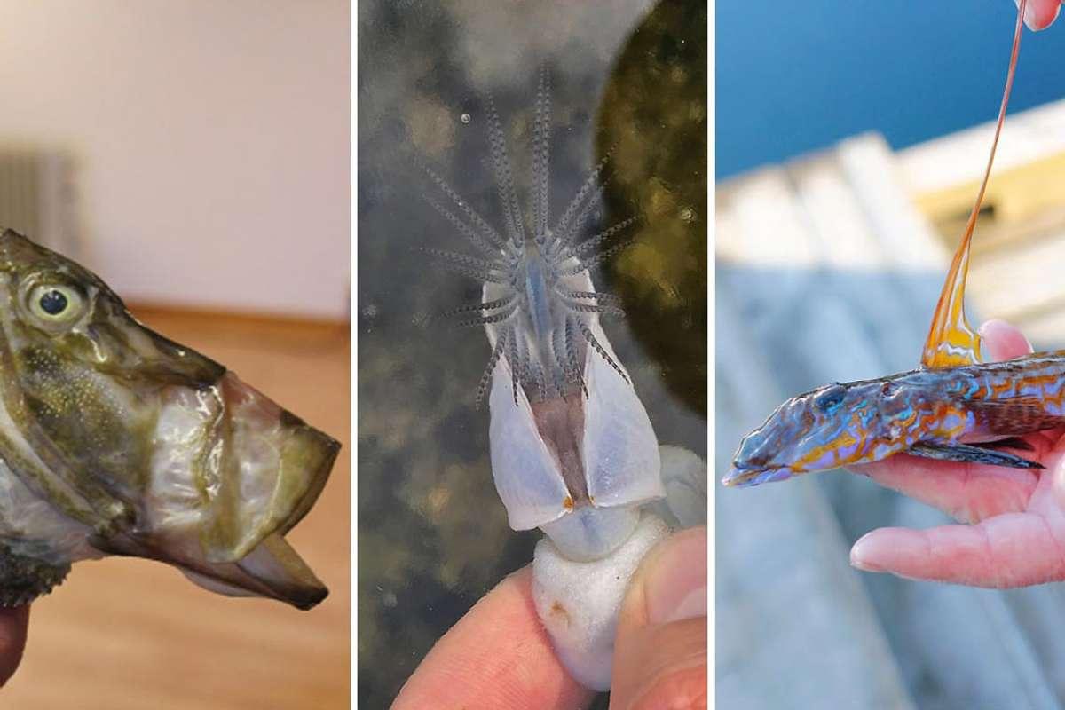 Hvilken art har du funnet? Ta bilde - få svar