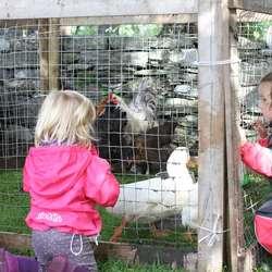 Høns og gjess var spennande å helse på (foto: AH)