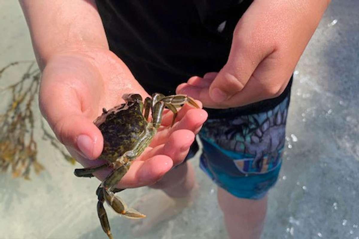 Krabbefangst kan vera både gøy og litt skremmande. (Foto: Eventus)