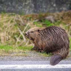 Tore tar bilde av dyr og natur langs vegen. (Foto: Tore Njøten)