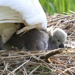 Fleire ungar hadde kome ut av egget, men ikkje alle. (Foto: Kjetil Vasby Bruarøy)