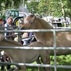 Hestene var populære å klappe (foto: AH)