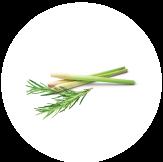 Crushed lemongrass and rosemary. Crisp, clean and energising.