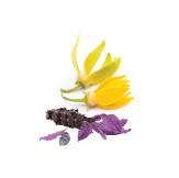Springtime. A vibrant, sweet nectar pressed from lavender and ylang ylang flowers.