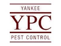 Yankee Pest
