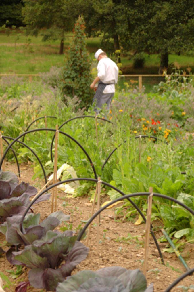 Cook in Garden