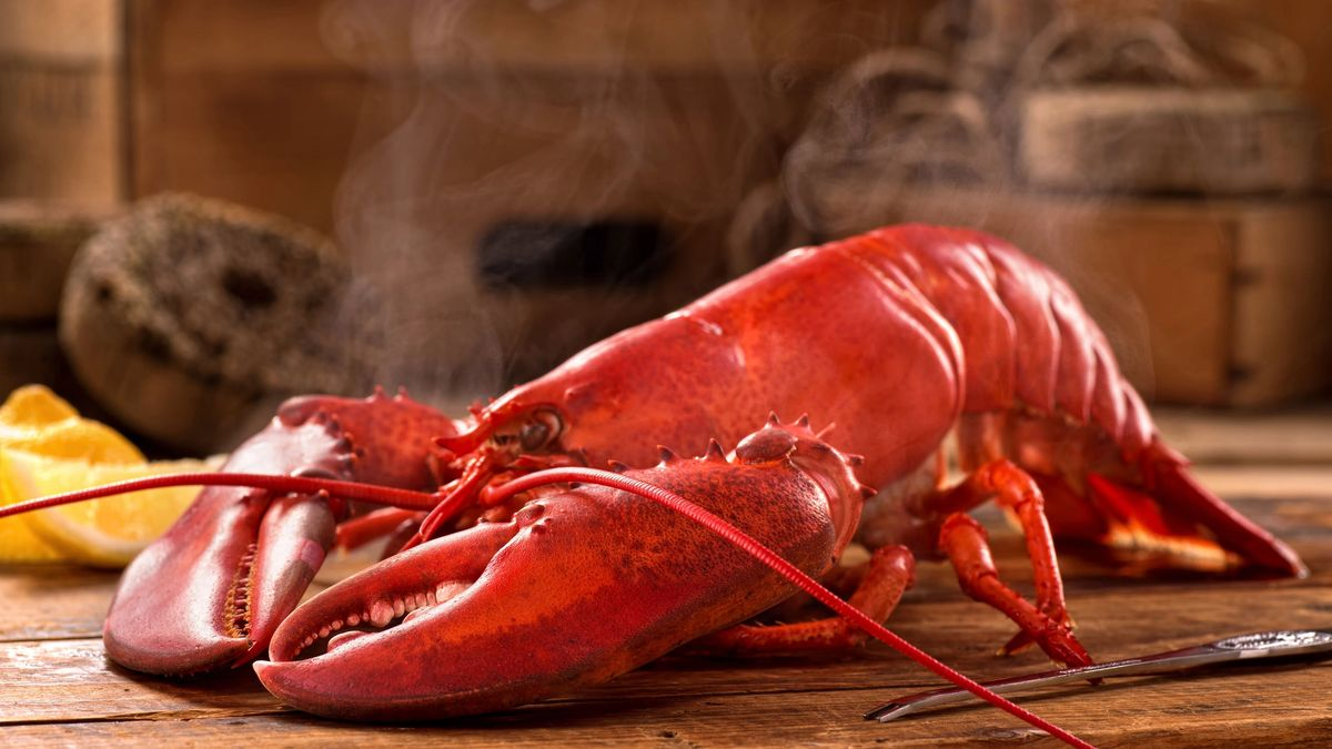 A delicious freshly steamed lobster in the rough.