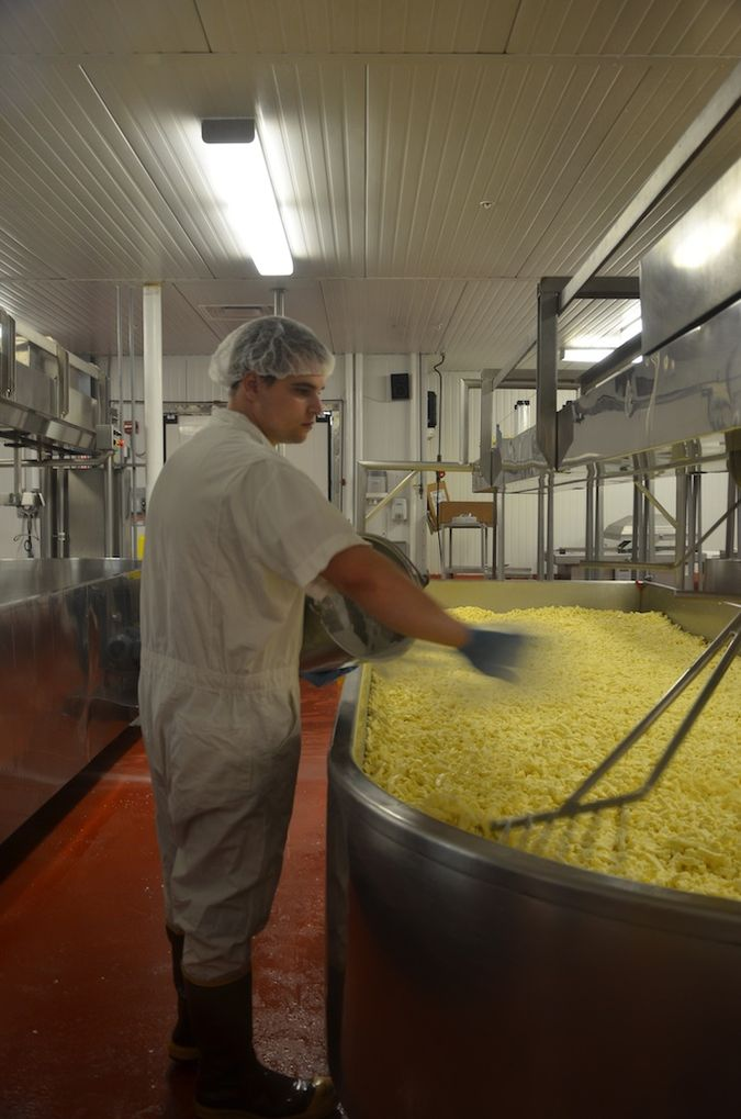 Salting the cheddar curds at Grafton Village Cheese Co.