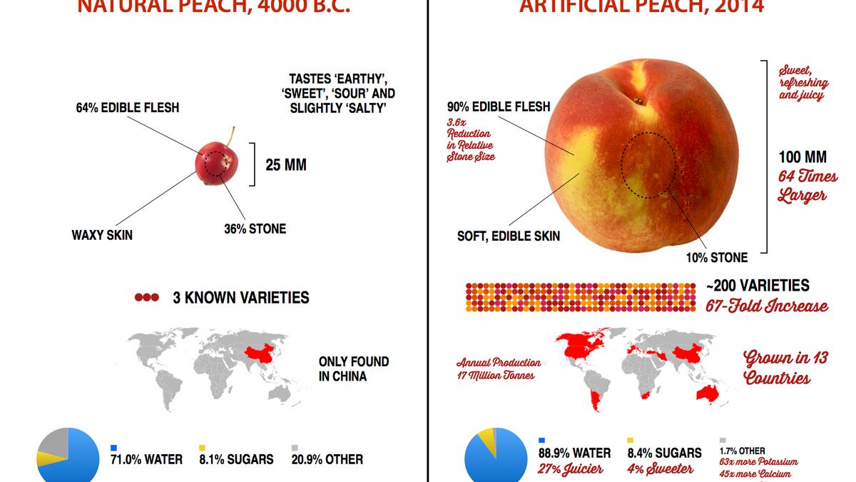 artificial-natural-peach