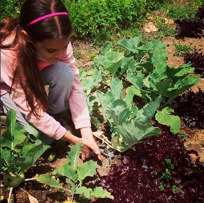 Harvesting at el huerto of El Albergue Ollantaytambo